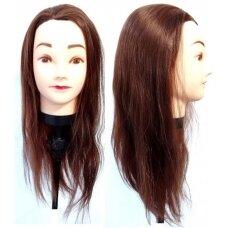 Galva mokymams, rudi, 55 cm